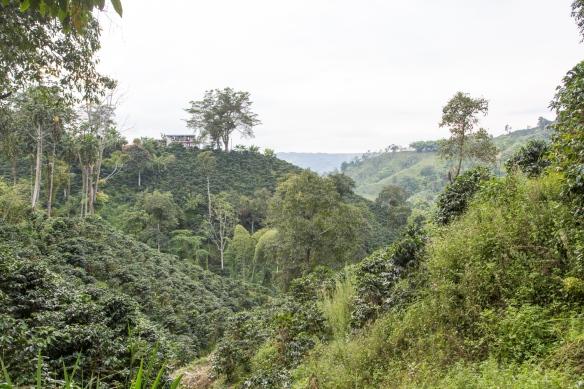 haciendalandscape_2